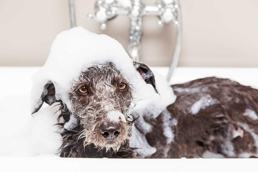Pies wykąpany w szamponie antyalergicznym, a także najlepsze produkty, najciekawsi producenci, działanie oraz zastosowanie