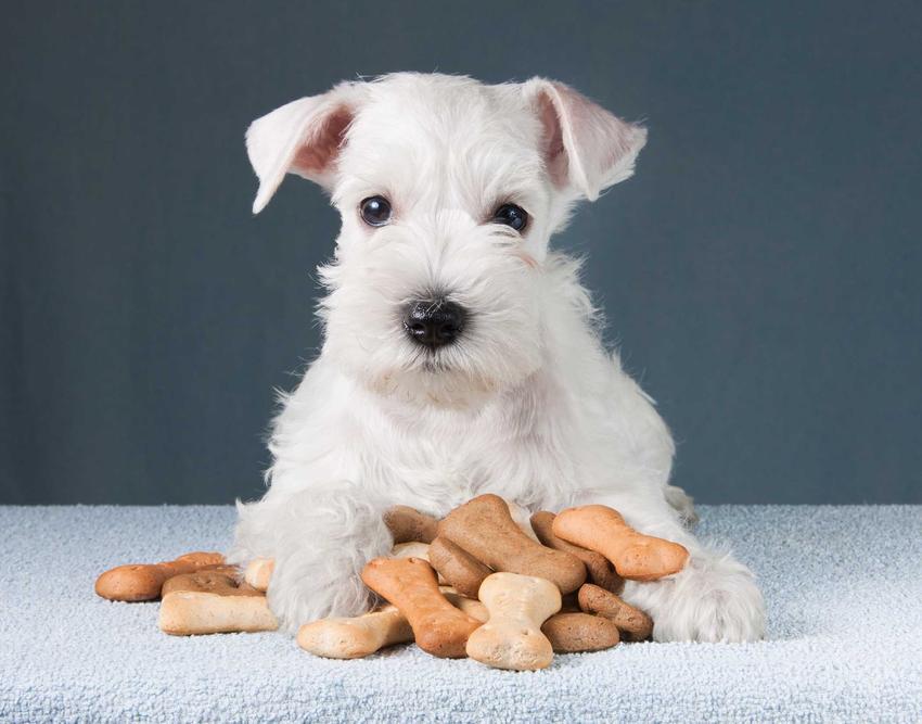 Mały pies siedzący przy ciasteczkach i przekąskach dla psa, a także naturalne przysmaki dla psa, rodzaje, ceny, skład oraz opinie
