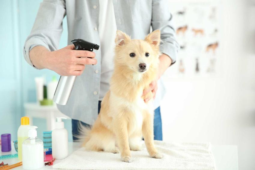 Mężczyzna spryskujący sierść psa suchym szamponem, a także suchy szampon dla psa, rodzaje, skuteczność, ceny i zastosowanie