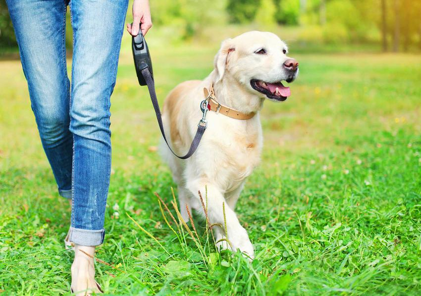 Pies wyprowadzany na spacer na smyczy flexi, a także informacje o smyczach - rodzaje, ceny, opinie, porady oraz najważniejsze informacje