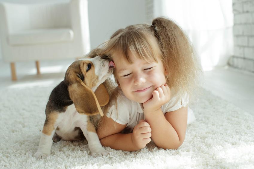 Dziewczynka bawiąca się z psem na dywanie oraz psy najbardziej przyjazne dzieciom
