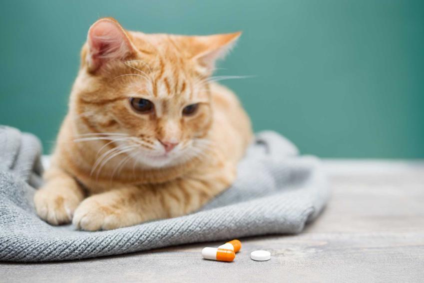 Chory na nosówkę kotów kot leżący na kocyku przy tabletkach, a także objawy, leczenie oraz powikłania choroby