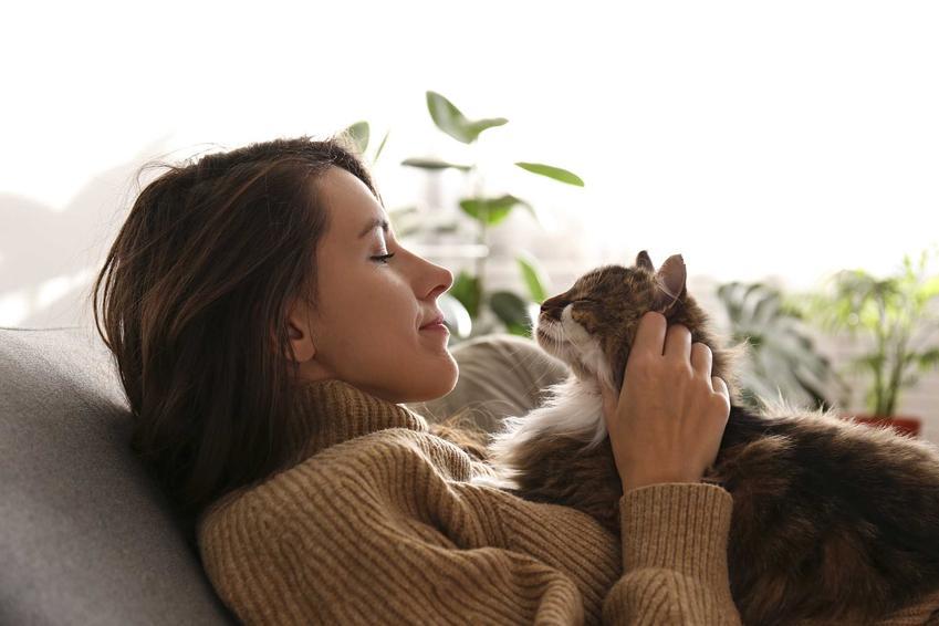 Kot przytulający się do właścielki, a także informacje, jak oswoić kota krok po kroku, sposoby na udomowienie kociaka