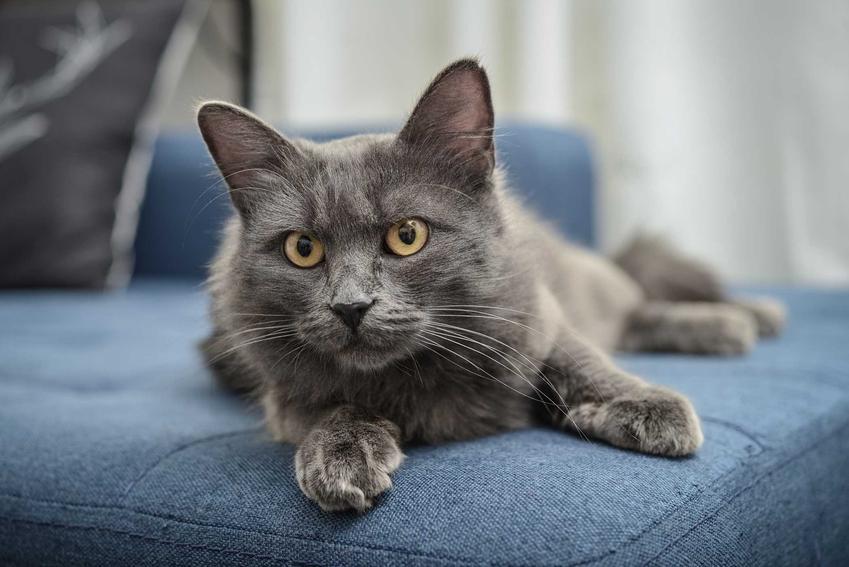 Czarny kot leżący na granatowej kanapie, a także 20 najbardziej zaskakujących ciekawostek o kotach, które warto wiedzieć