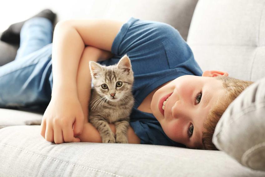 Dziecko bawiące się z kotem, a także TOP 20 ciekawostek o kotach, których dotąd nie znałeś, czyli co warto wiedzieć