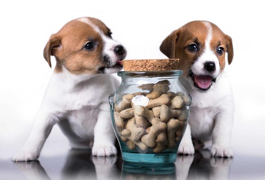Dwa małe psy przy słoiku ze smakołykami dla psów, a także rodzaje smakołyków, składy, ceny, porady, zastosowanie oraz producenci