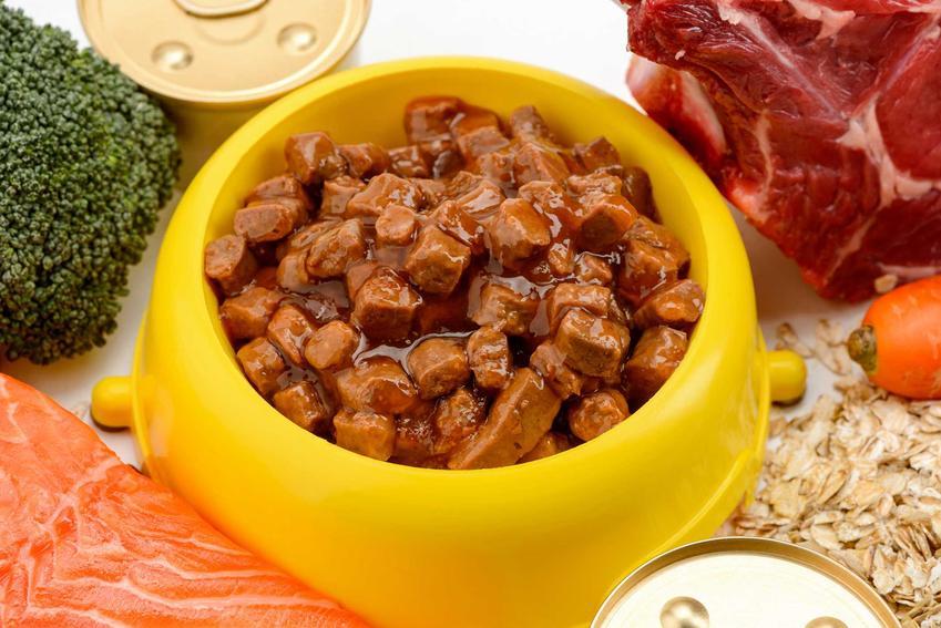 Karma z puszki dla psa wyłożona do miseczki, a także najważniejsze informacje o karmach, skład, jakość, wartości odżywcze, cena