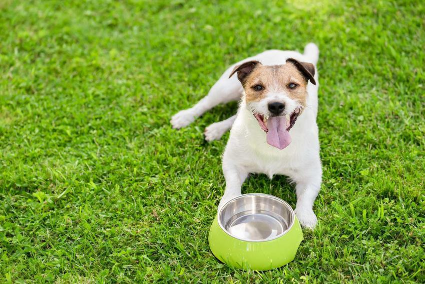 Pies leżący przy pustej misce, a także informacje o karmach z puszki dla psa, skład, cena, wartości odżywcze, najlepsi producenci
