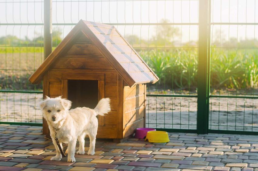 Pies stojący przy budzie, a także inne domki dla psa, rodzaje, wymiary, ceny, instrukcja, jak zrobić domek dla psa