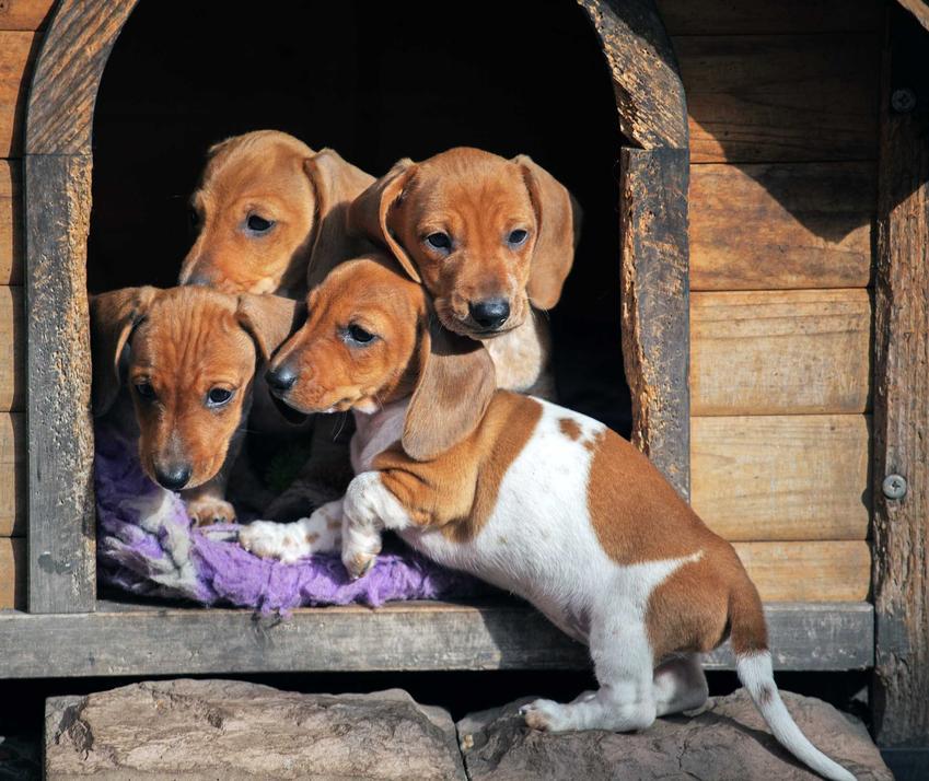 Małe pieski przy wejściu do domku dla psa, a także rodzaje, wymiary, ceny oraz instrukcje, jak zrobic domek dla psa
