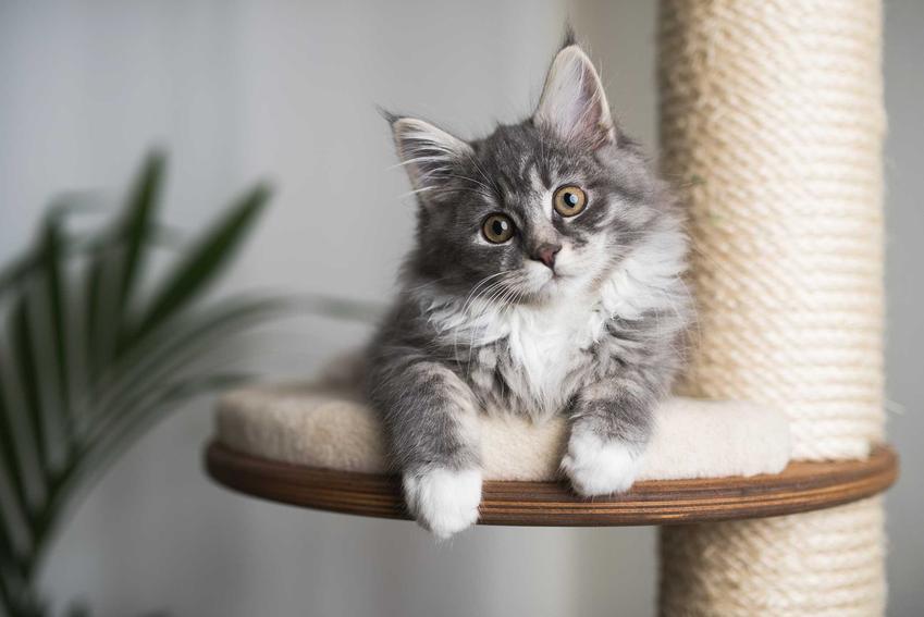 Kot leżący na drapaku dla kotów, a także rodzaje sufitowych drapaków krok po kroku, ceny, opis, porady przy zakupie