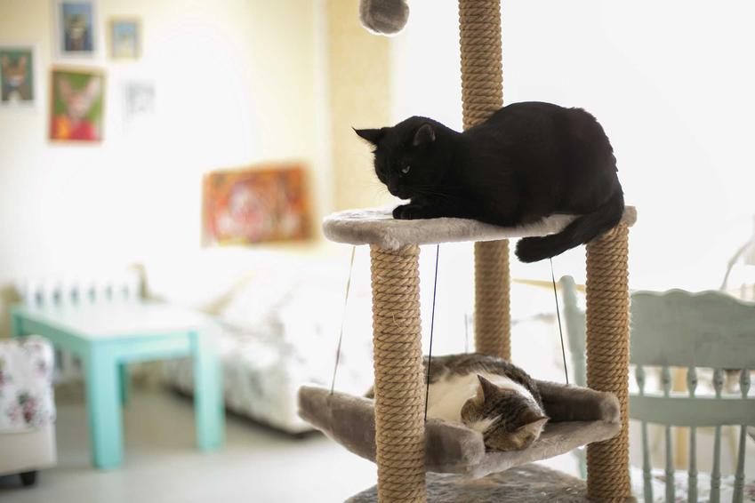 Koty bawiące się na drapaku sufitowym, a także informacje o drapakach, ceny, porady, rodzaje drapaków dla kotów