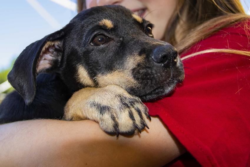 Pies kundel ze schroniska w ramionach nowej właścicieli, a także opis, charakter, usposobienie, wymagania i porady