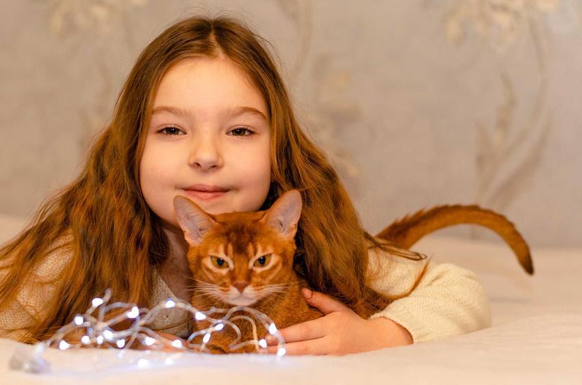 Kot abisyński leżący obok małej właścicielki, a także TOP 10 ras kotów dla dzieci oraz najlepsze rasy kotów dla dzieciaków