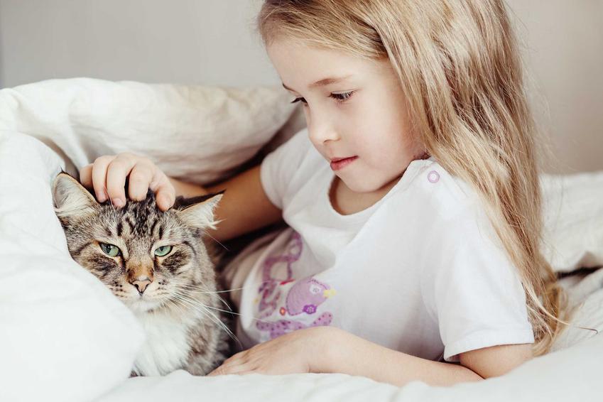 Kot syberyjski siedzący obok dziewczynki, a także TOP10 ras kotów, które dobrze sprawdzają się przy dzieciach