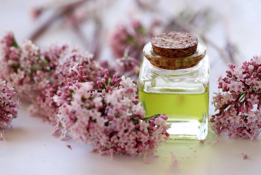 Olejek z waleriany w buteleczce obok kwitnących kwiatów, a także jak działa waleriana dla kota krok po kroku