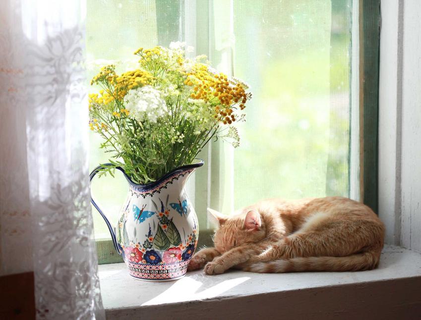 Kot śpiący przy dzbanku, a także jak działa waleriana dla kota, zastosowanie oraz działanie waleriany krok po kroku