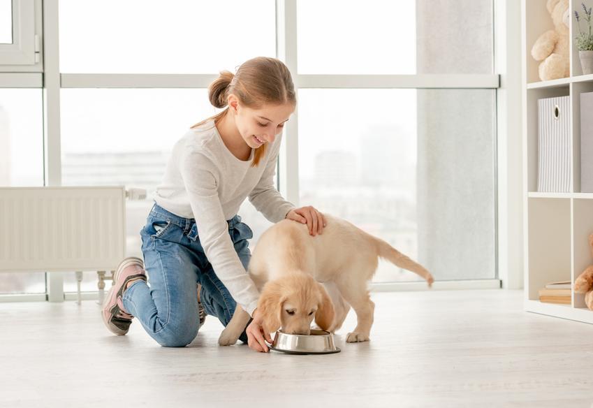 Dziewczynka i szczeniak podczas karmienia, a także porady do jakiego wieku rośnie pies