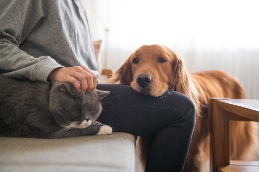 Pies przytulający się do właściciela, który głaszcze kota, a także jak przebiega socjalizacja psa krok po kroku z ludźmi i zwierzętami