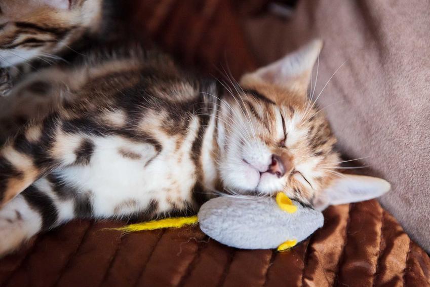 Kot przytulający się do pluszowej myszki, a także zabawki interaktywne dla kotów krok po kroku, opinie, marki, propozycje