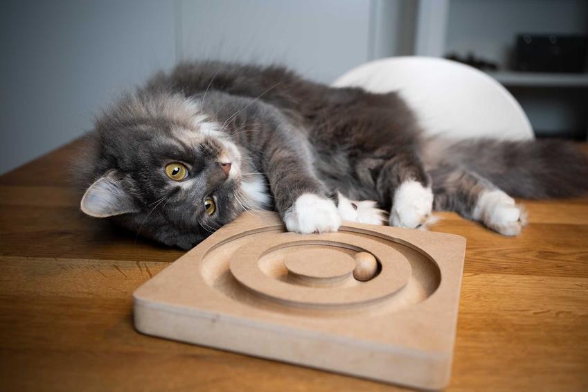 Kot leżący obok zabawek, a także zabawki interaktywne dla kotów, marki, opinie i propozycje dla kotów