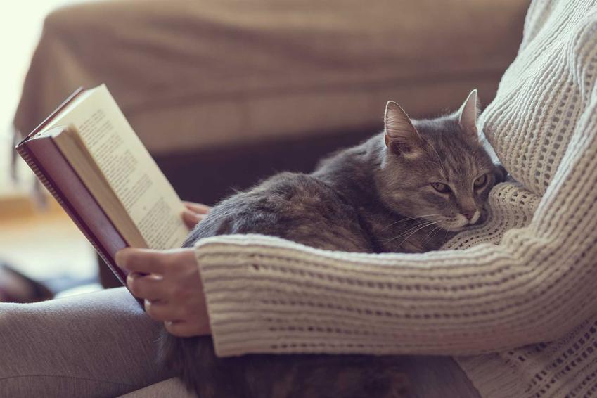 Kot tulący się do właścicieli czytającej książkę, a także czy lepiej wybrać kota, czy psa - który czworonóg do ciebie pasuje