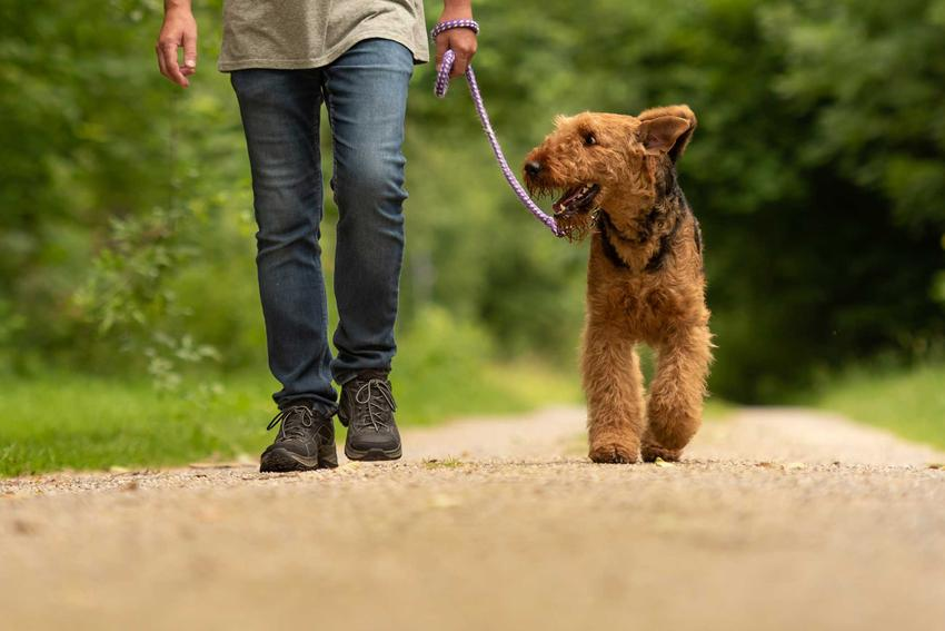 Mężczyzna z psem na spacerze, a także kot vs pies, czyli którego zwierzaka wybrać