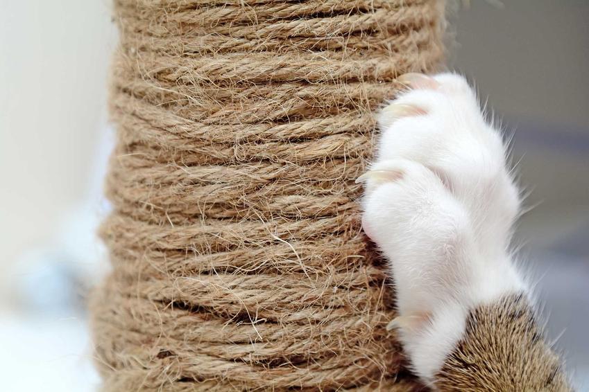 Kot ostrzący pazury na drapaku dla kotów, a także obcinanie pazurów u kota krok po kroku - kraktyczne porady, jak obcinać pazury kota