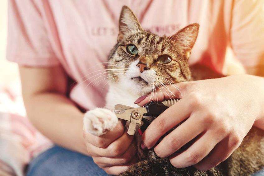 Właścicielka obcinająca pazury u kota, czyli jak obcinać pazury kotu krok po kroku - praktyczne wskazówki