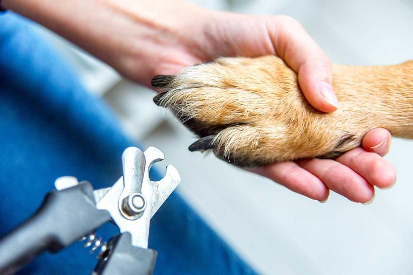 Obcinanie psu pazrów specjalnymi obcęgami, a także jak obciąć psu pazury krok po kroku