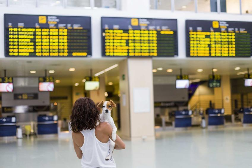 Kobieta niosąca psa na lotnisku, a także informacje o podróżach psa: paszport dla psów krok po kroku
