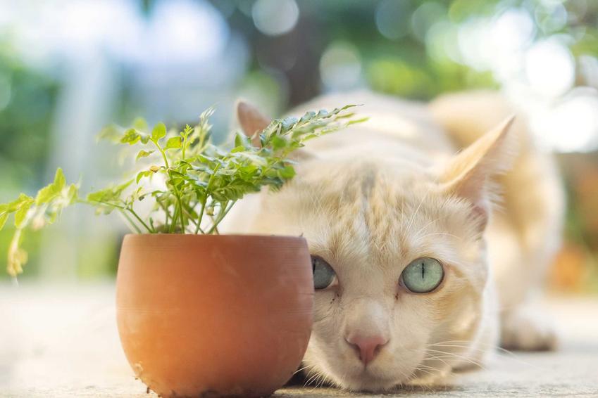 Kot chowający się za doniczką, a także ailurofobia, czyli lęk przed kotami - objawy, przyczyny i leczenie fobii