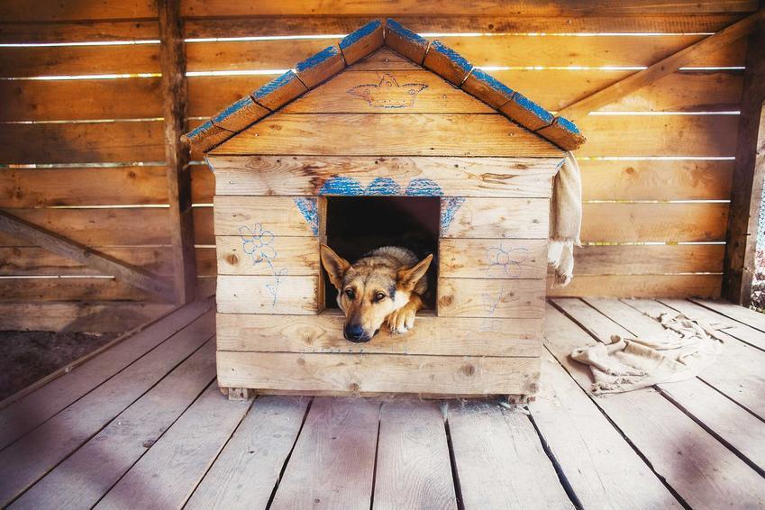 Owczarek leżący w budzie dla psa, a także najlepsze budy dla psów - nasze TOP 5