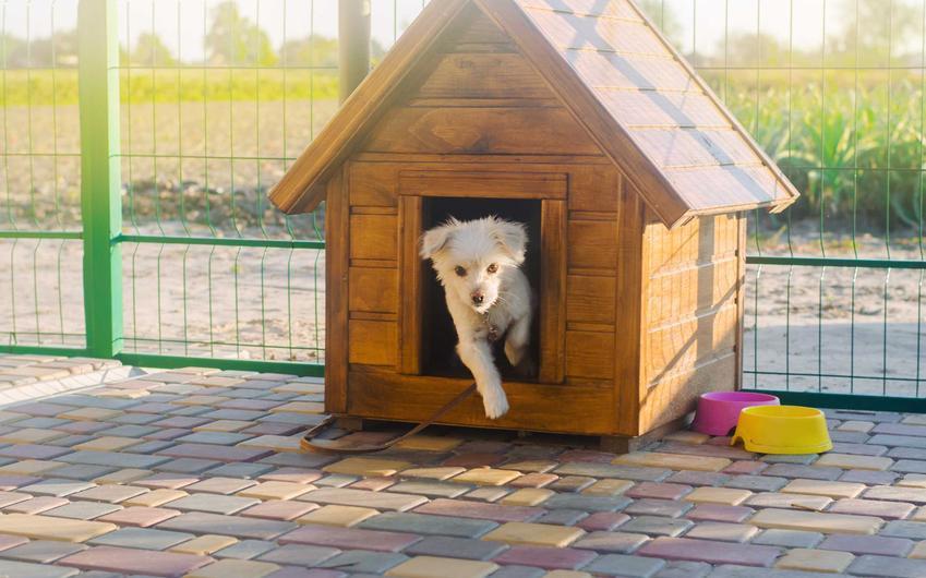 Buda dla osa z niewielkim białym labladorem wewnątrz, a także jaka buda dla psa sprawdza się najlepiej - TOP 5