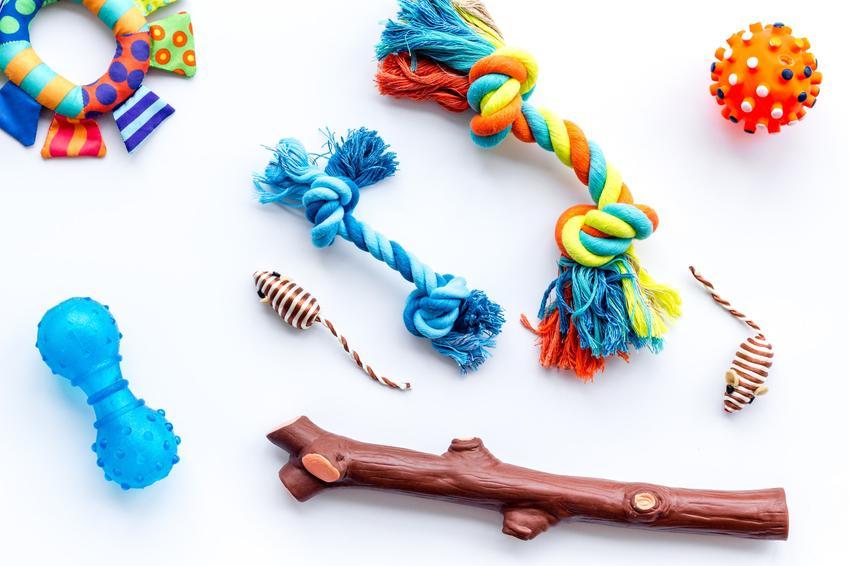 Różne zabawki edukacyjne dla psa na białym tle, a także porady zakupowe i ceny