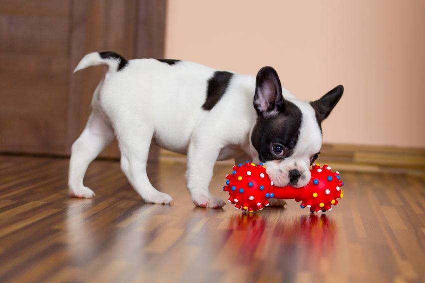 Pies bawiący się gryzakiem, a także polecane zabawki edukacyjne dla psa, ich rodzaje i ceny