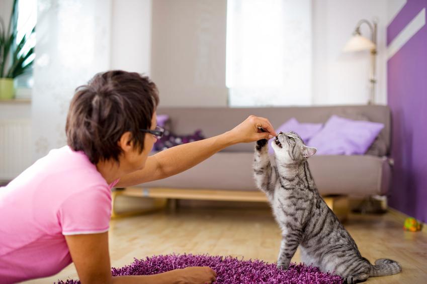 Kobieta podczas tresury kota w domu, a także porady, jak wychować kota i wychowanie kota