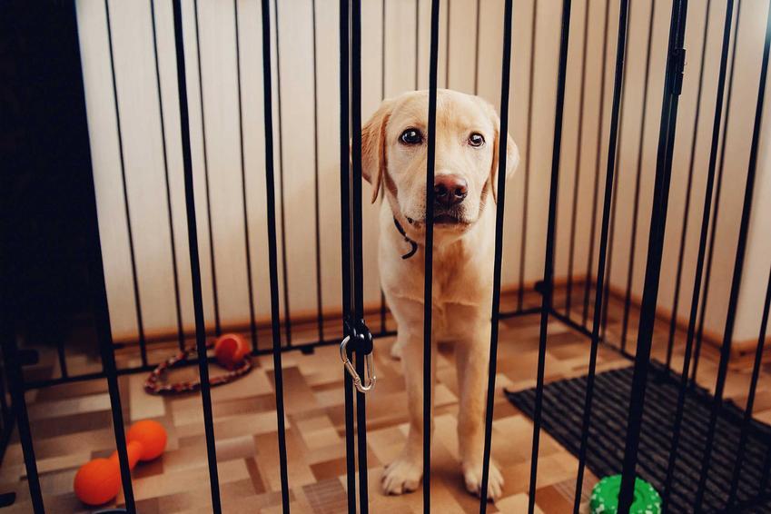 Pies siedzący w kojcu dla psa, a także informacje, jak zbudować kojec dla psa w domu i w ogrodzie krok po kroku