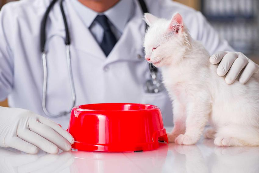 Kot przy czerwonej misce w gabinecie u weterynarza, a także informacje, dlaczego kot nie chce jeść - 8 najczęstszych przyczyn