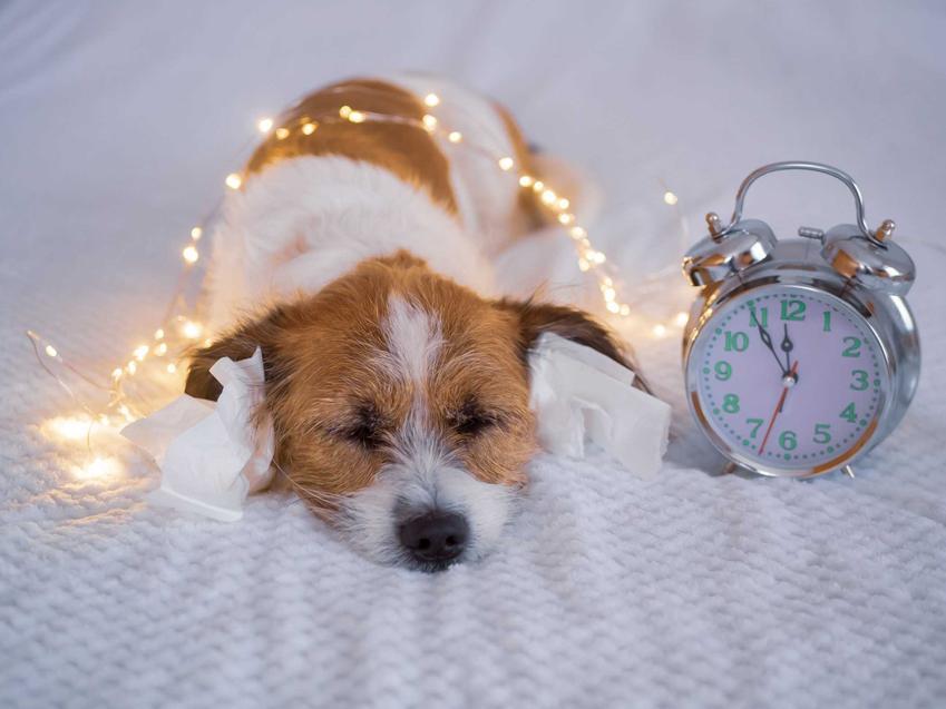 Pies leżący na łóżku i owinięty światełkami, a także informacje, jak chronić psa w Sylwestra - najlepsze porady dla właścicieli psów