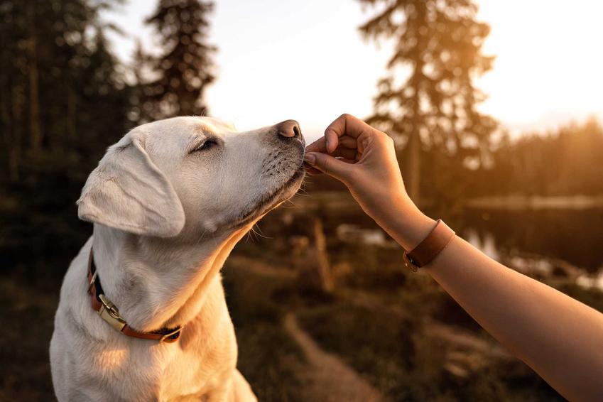 Podawanie orzechów psu, a także informacje, czy pies może jeść orzechy krok po kroku oraz różne rodzaje