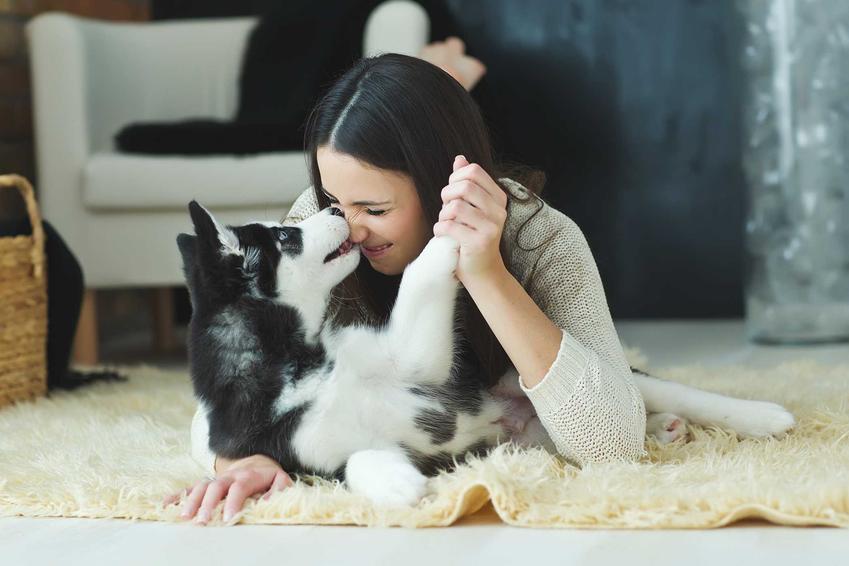 Pies liże właściciela po twarzy, a także informacje, dlaczego psy liżą właściciela, wyjaśnienie zachowania psów