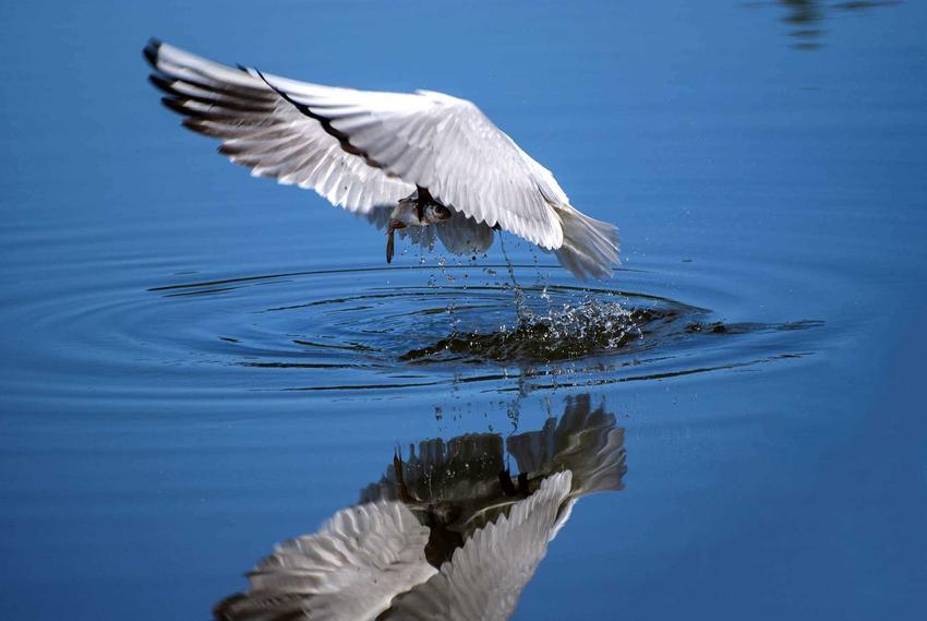 Ptak pijący wodę ze zbiornika wodnego, a także polowanie na ptaki ze względu na zdobywanie żywności lub jako trening dla sportu