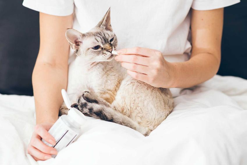 Kobieta podająca suplementy kotu, a także suplementy i dieta w czasie linienia dla psa i kota