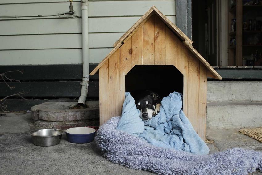 Pies leżący w budzie wyścielonej kołdrą i kocami, a także ocieplana buda dla psa, jej rodzaje, wymiary, cena i zastosowanie