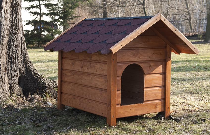 Jak zbudować drewnianą budę dla małego psa?