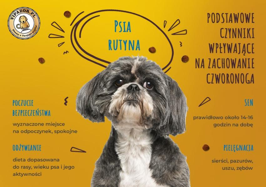 Zachowanie psa – od czego zależy?
