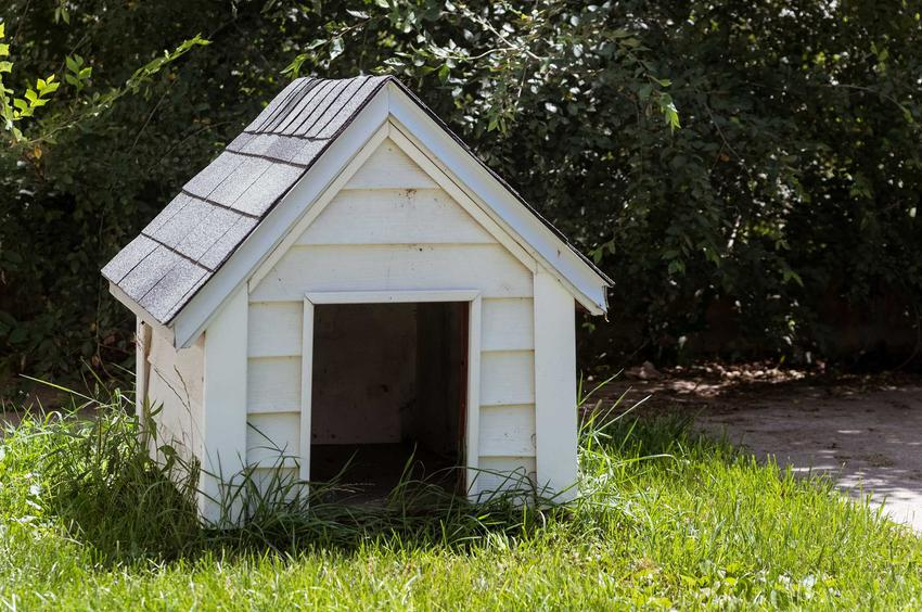 Buda dla psa z białych deseczek w ogrodzie, a także 3 projekty budy dla psa krok po kroku