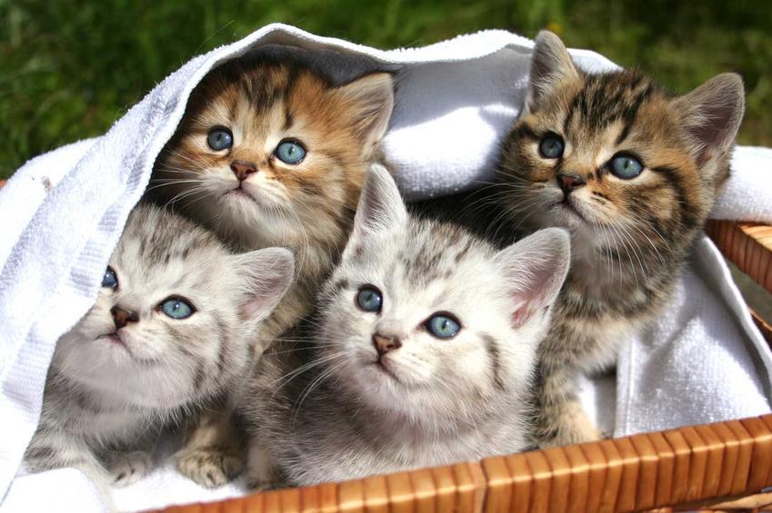 Brązowe i białe kocięta, a także informacje, jak odróżnić kota od kotki, rozpoznawanie płci u kotów