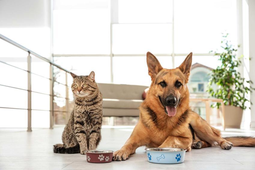 Pies i kot siedzący przy swoich miskach, a także dieta w chorobach dolnych dróg moczowych psów i kotów i żywienie chorych zwierząt